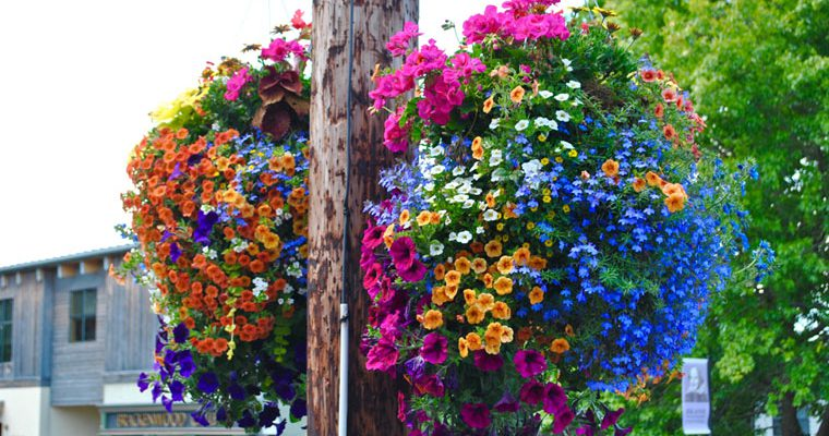 Hanging Baskets & Downtown Landscaping